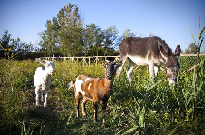 Le foto della fattoria didattica la serra in toscana for Piani di costruzione della fattoria